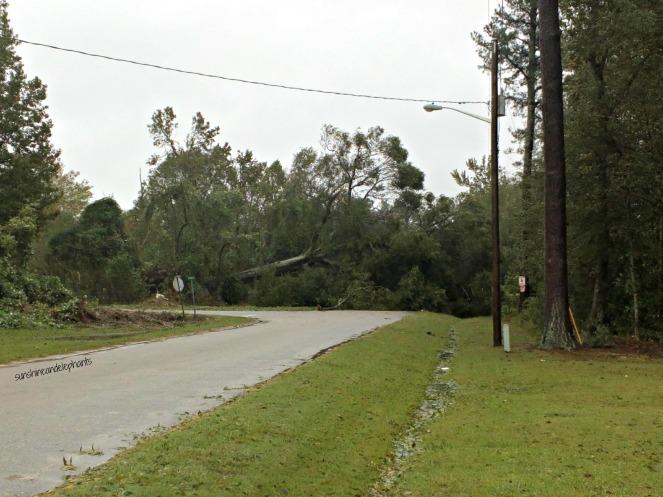 treescoveringroad